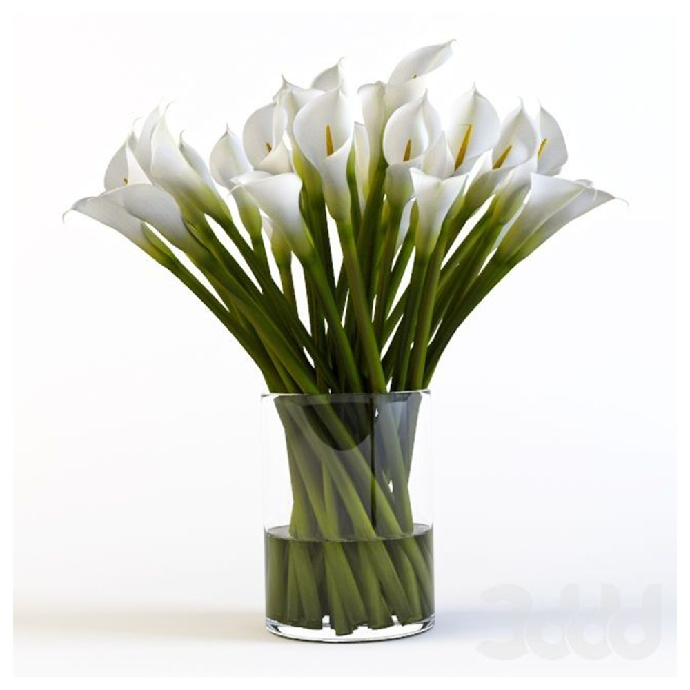 20 kala Lily's white with glass vase
