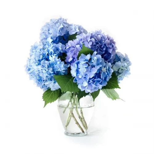 blue hydrangea with glass vase