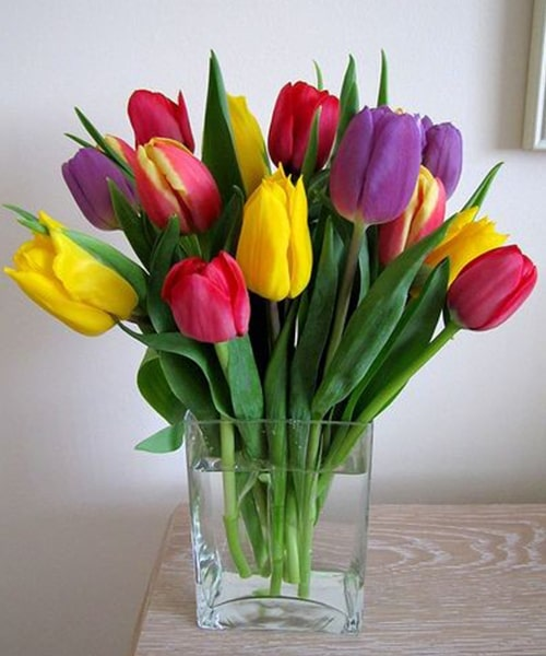 Mixed of 15 tulip with glass vase