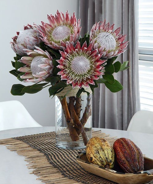 5 Stem pink protea with glass vase