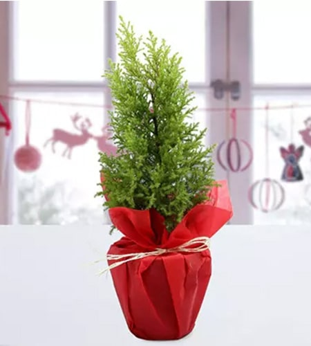 Dazzling Decorated Christmas Tree