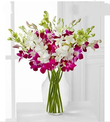 White & purple orchids in glass vase