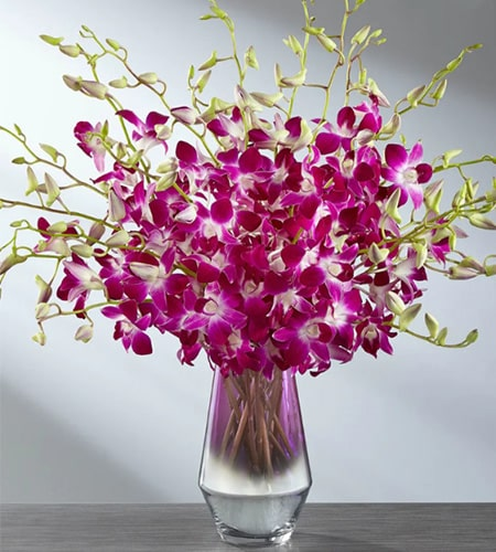 10 Royal Orchids Bunch in a glass vase