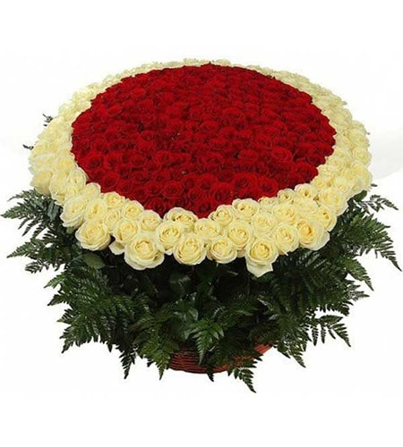 200 red and white roses arrangement