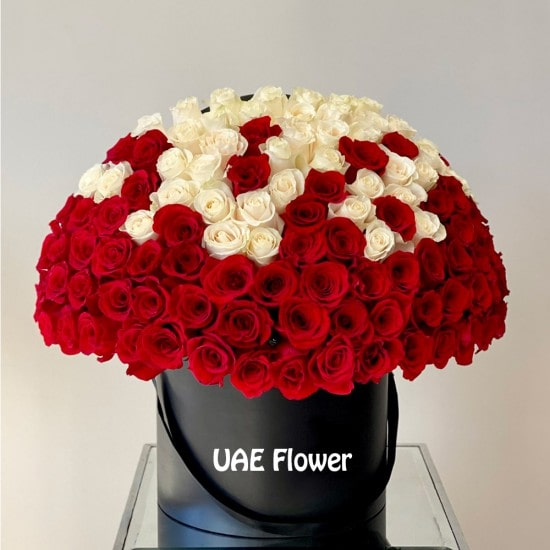 Signature 100 Red and White Ombre Roses